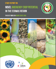 Study Report on Novel Bioenergy Crop Potential in the ECOWAS Region